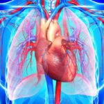 Some Useful Tips To Reduce The Risk of Heart Diseases