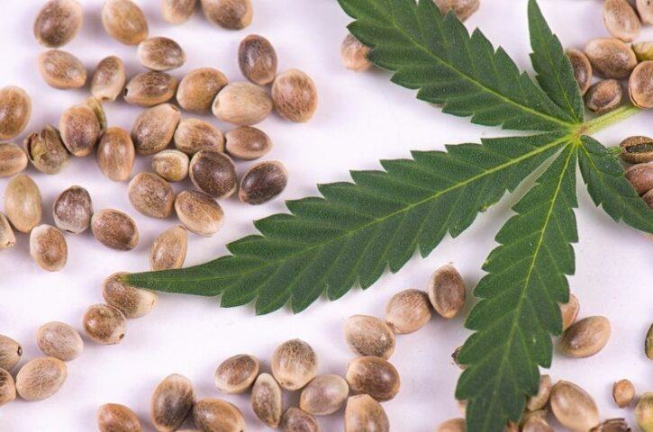 A Complete Guide To Buy Cannabis Seeds Online