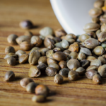Four ways to spot healthy cannabis seeds