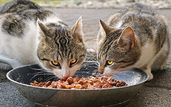 Know about Which Cat Food To Purchase- The Best Guide!